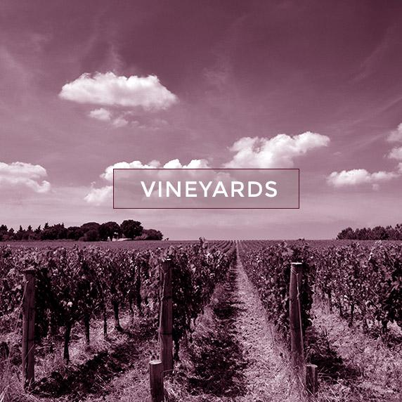 qhome_vineyards